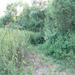 GePaRdLaCeE: P8130163 (Egyedi) - indafoto.hu