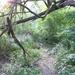 GePaRdLaCeE: P8130165 (Egyedi) - indafoto.hu
