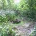 GePaRdLaCeE: P8130170 (Egyedi) - indafoto.hu