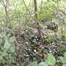 GePaRdLaCeE: P8130173 (Egyedi) - indafoto.hu