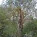 GePaRdLaCeE: DSC 4651 (Egyedi) - indafoto.hu