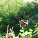 Pókebéd