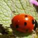 Méhek, bogarak, pókok és egyebek....