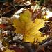 Album - Mátra ősszel