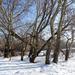 Szada - patak- - a nyár télen