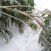 jég alatt meghajló bambusz