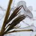 jégkorszak 2