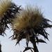 száraz növény 2