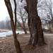 Veresegyház - tó part 1