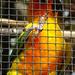 Bp- állatkert - papagáj 2