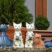 Tokaj - Hegyalja galéria - macskák I