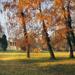 Alcsúti arborétum - őszi napfény