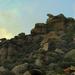 Fészkelő kőmadár