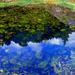04 Úrvölgy Mohás kövek a kis tóban