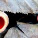06 Csészegombák