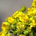 01 Virág a mészkőfalon I.