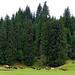 10 Erdő széli legelő
