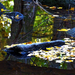 Zám-patak a Mátrában