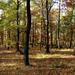 05 Erdő a riolittufa felett