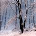 06 Tél a Karancson