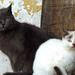 04 A túristaház cicái