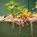 növény együttes