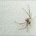pók (ki tudja milyen? )
