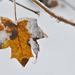 Tél az őszben.
