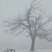 András-napi ködös télkezdet