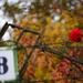 Az ősz utolsó rózsája