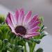 Album - Virágok,növények