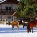 póni lovak,,,