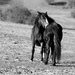 Horse love,,,