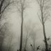 Köd előttem