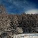 téli táj II