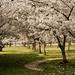 tavaszi természet I