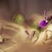 tavaszi természet III