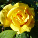 Rózsák a kertünkben, SzG3