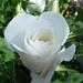 Virágok 01