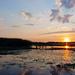 Gyűjtemény - Tisza-tó