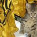 Album - Mohó & Lily és még más cicák...