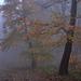Esős,párás,hideg ősz