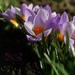 Közeleg a tavasz