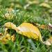 Megérkezett az ősz