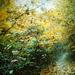 magic forest2