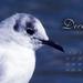 Indafotó háttérképek: 2012 december