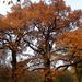 kecsességek ősszel