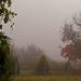 ködös kert