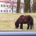 sétáló ló