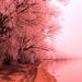 pink tree2